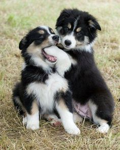 Daily Cute: It's National Puppy Day! The Daily Cute: It's National Puppy Day!The Daily Cute: It's National Puppy Day! Beautiful Dogs, Animals Beautiful, Dog Pictures, Animal Pictures, Eating Pictures, Funny Pictures, Cute Baby Animals, Funny Animals, Animals Dog