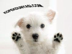 Eller Yukarı :)