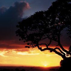 Hawaiian Sunset Sunday