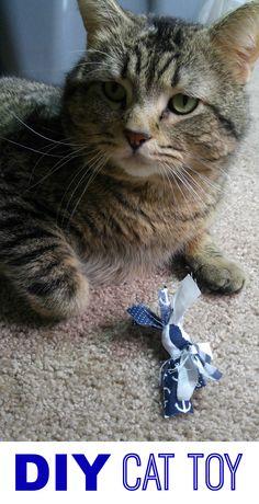 DIY Cat Toy #ProPlanCat #AmazingCatReactions AD