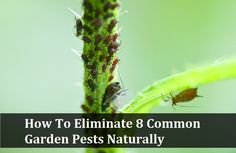 How To Eliminate 8 Common Garden Pests Naturally