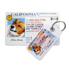 4580a0a947b6 Personalized Pet Driver's License ® ID Tag Kit International Drivers Licence,  Drivers Permit, Gifts
