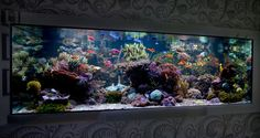 1000 Images About Reef Tank Inspiration On Pinterest Reef Aquarium Salt Water