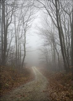 November Fog by the Photographer ~ Patrick Zephyr.  I love the feeling this creates