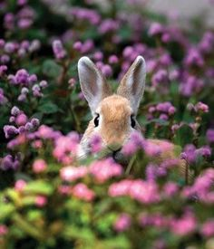 Easter rabbit in flowers. hard to tell if the bunny is real or not!