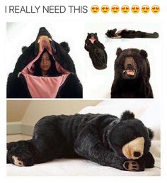 Antique Bear Attack Sleeping Bag Pict Bring The Funny Humor 4 Snarky On Pinterest Funny Quotes Memes