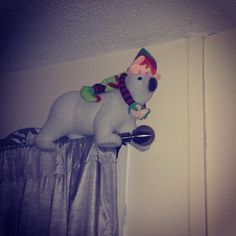 Buddy's decided he wants a polar bear ride along the curtain pole #elfontheshelf #elf #polarbear #christmas #mischief #buddytheelf