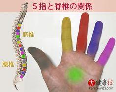 指掴み対応表 便秘 ガス抜き 胃腸不調 指合わせ方法
