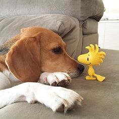 Hello! My name is Sophie. Do you know where I can buy The Peanuts Movie tickets?