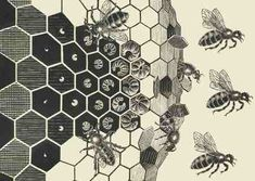 http://beelore.files.wordpress.com/2007/07/escher-metamorphose-bees.jpg