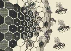 http://beelore.files.wordpress.com/2007/07/escher-metamorphose-bees.jpg