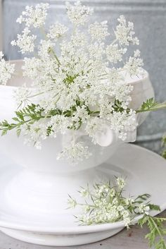 Ana Rosa, via:vibekedesign Ikebana, Queen Anne Lace, White Flowers, Beautiful Flowers, White Lace, Vibeke Design, Deco Floral, White Cottage, Rose Cottage