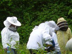 Troed y Rhiw Organic Farm, Ceredigion. Beekeeping Weekends 2014 - June 14 & 15, July 19 & 20 - £150 VAT inclusive http://www.organicholidays.co.uk/at/3078.htm