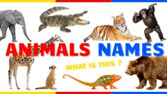 Animals Picture Vocabulary English Teachers, Educational Videos, Animal Pictures, Vocabulary, Names, Learning, Movie Posters, Movies, Animals