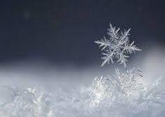 Image result for copos de nieve reales