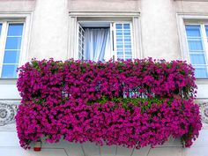 fransiz-balkon-cicekler