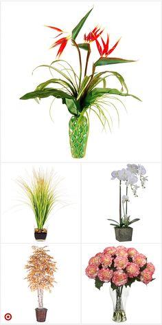 Hibiscus Tree, Hibiscus Garden, Hibiscus Flowers, Exotic Flowers, Beautiful Flowers Pictures, Beautiful Flowers Garden, Funeral Flowers, Wedding Flowers, Modern Flower Arrangements