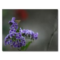 @Overstock - Artist: Patty Tuggle  Title: Purple Flowers and Moth  Product Type: Gallery-wrapped canvas arthttp://www.overstock.com/Home-Garden/Patty-Tuggle-Purple-Flowers-and-Moth-Canvas-Art-Refurbished/6830336/product.html?CID=214117 $37.99