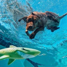 GoPro Awards is calling on content creators to submit their best gopro videos, clips, and photos. Check out our content challenges, share your content, and win big! Underwater Dogs, Underwater Pictures, Gopro Photography, Underwater Photography, Amazing Photography, Paws And Claws, Lovely Creatures, Vizsla, Mans Best Friend