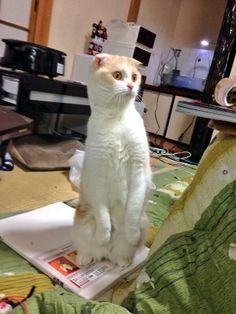 Twitter / kyoryu_kuramo: 僕の絵は無断転載されてますけど、それはいいんですけど。 猫の ...