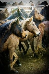 horses. Absolutely Love!!!