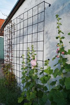 A cool way to grow vines up the side of the house without having them root on your siding.: