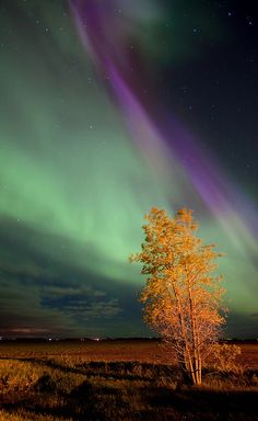 Northern Lights - Canada.That is so beautiful.Please check out my website thanks. www.photopix.co.nz