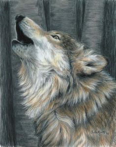 Drawing, colored pencil on paper by Carla Kurt at Fine Art America