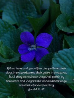 Job 36:11-12 Ending my days in prosperity and years in pleasures sounds really good to me.  The picture is from my garden, I love those tiny little violets.