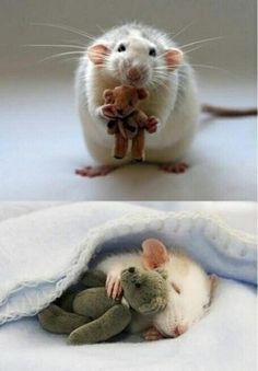 "Baby Animals on Twitter: ""For anyone feeling a bit sad, here's a picture from a woman who makes Teddy Bears for her pet mouse https://t.co/G08yjJf5cJ"""