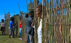 Kenneth Magaga with his team from Qolweni hold up their sections of Running Fences at the Human Fence gathering towards the end of Erica Lüttichs two week residency for Site_Specific Fences, Environment, Africa, Running, Artist, Boss, Picket Fences, Iron Fences, Keep Running