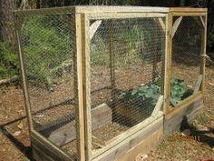 Container Garden Squirrel And Gardens On Pinterest