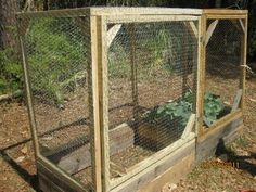 Raised Bed Garden cage to keep out squirrels and bunnies Garden
