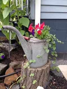 vintage watering cans in the garden, gardening, repurposing upcycling, Sherry McGinnis s former oil can