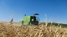 モンサント幹部が'農業のノーベル賞'を受賞: マスコミに載らない海外記事