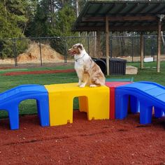 We manufacture Dog Play Equipment that actively promotes physical exercise, mental stimulation and social interaction. Backyard Dog Area, Dog Friendly Backyard, Backyard Ideas, Indoor Dog Park, Indoor Play, Puppy Playground, Dog Kennel Designs, Kennel Ideas, Dog Bathroom