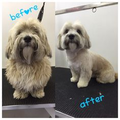 The 1071 Best Dog Grooming Near Me Images On Pinterest Dog