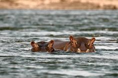 Into Canoeing? Try It on an African River Safari - WSJ