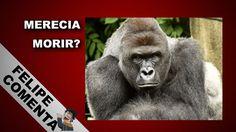 Matan a Gorila en Zoológico de EEUU para Salvar a Niño