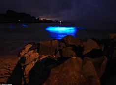 Bioluminscence was first spotted in Sydney Harbour in 1860