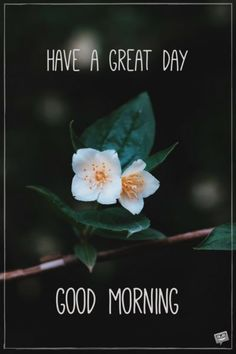 Looking for for inspiration for good morning motivation?Check out the post right here for unique good morning motivation ideas. These amuzing quotes will brighten your day. Good Morning Motivation, Good Morning Handsome, Good Morning Flowers, Good Morning Picture, Good Morning Sunshine, Good Morning Messages, Good Morning Good Night, Morning Pictures, Good Morning Wishes