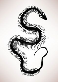 Snake Bone Skeleton. I want a small tattoo of this