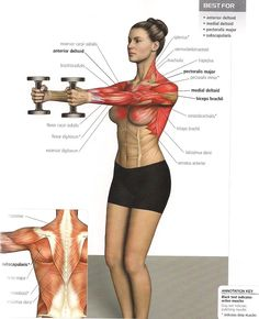 Front Shoulder Training - Stronger Back Healthy Fitness Level. Love the visual of the muscles worked Fitness Workouts, Yoga Fitness, Fitness Motivation, Workout Tips, Senior Fitness, Sport Fitness, Elevación Frontal, Flexibility Workout, Shoulder Workout