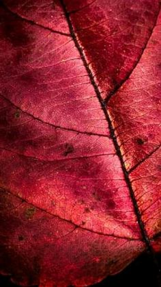 Patterns In Nature, Textures Patterns, Marsala, Arte Aries, Backgrounds Wallpapers, Fotografia Macro, Photo Awards, Foto Art, Red Aesthetic