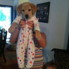 Here's a puppy in a onesie to brighten your day