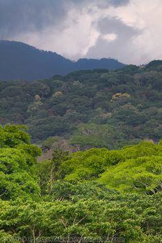 Rain Forest, Tortuguero National Park, Costa Rica | Patrick J. Endres