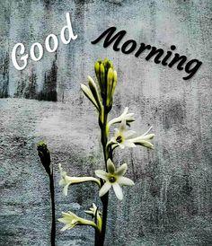 Good Morning Images For Whatsapp Good Morning Beautiful Flowers, Good Morning Nature, Good Morning Happy Sunday, Good Morning Roses, Amazing Flowers, Morning Quotes Images, Good Morning Images Hd, Morning Pictures, Good Morning Wishes Gif