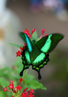 "Green Butterfly (by Dean Ruben) ~ This photo takes you to a website with amazing pictures. It's called ""Outdoor Sanctuaries""."