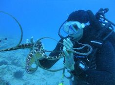 Playing with an #octopus in #Hawaii