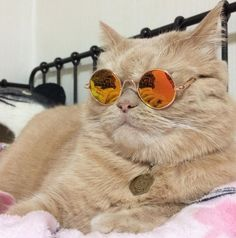 me as a cat???